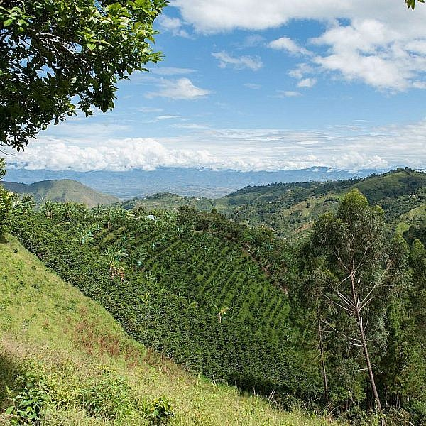 Photo of Huila Region of Colombia with coffee terraces